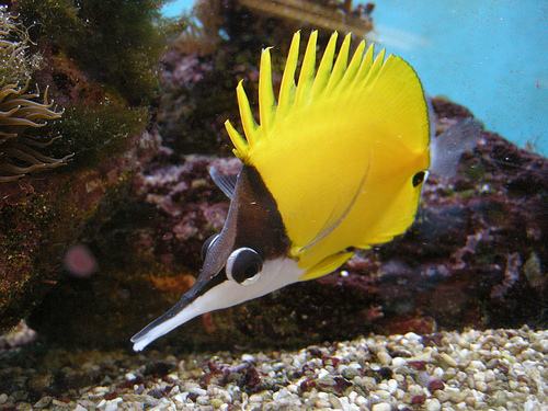 saltwater fish pets home pet care information fish